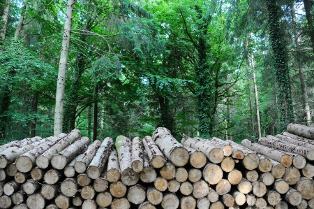 A long pile of timber logs stacked up in a forest Stock Photo