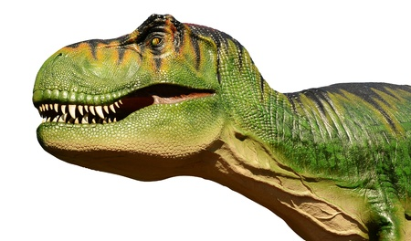 The head of a large model Tyranosuarus Rex dinosaur isolated on a pure white background
