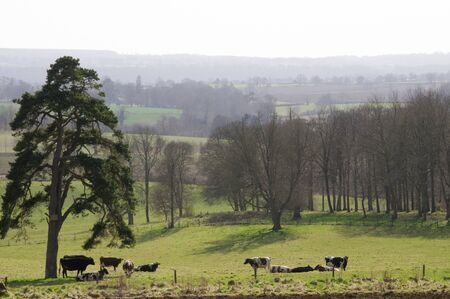 A rural country landscape scene over looking a field of cows Stock Photo