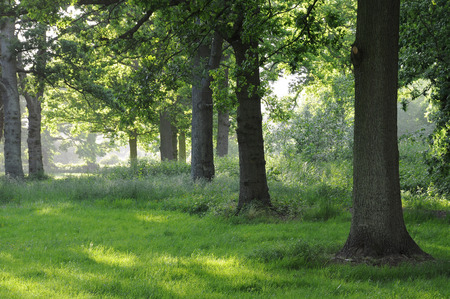 A sunny grassy clearing in an old forest
