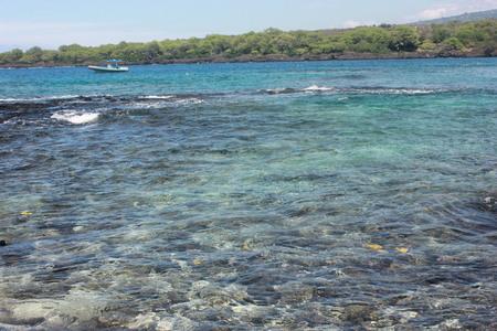 The ocean life in hawaii Stock Photo