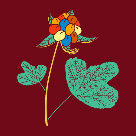 Vector illustration of hand drawn cloudberry. Design for t-shirt, card. Tribal african style.