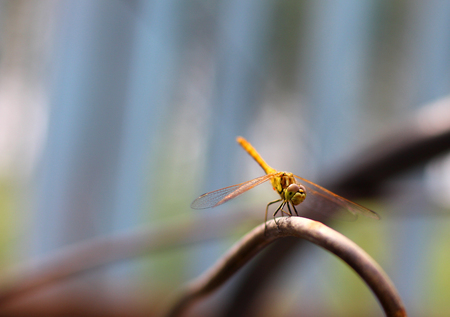 Dragonfly in the environment of nature, using as a background or Wallpaper.The concept of writing the article.