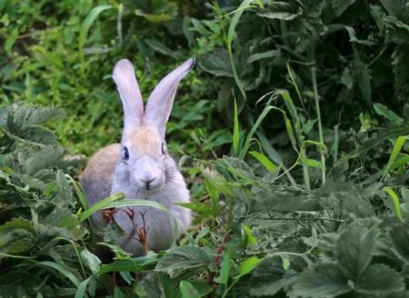little gray rabbit sitting in green grass on nature Stock fotó