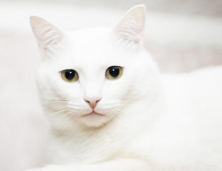 Lovely white cat on white background Stock Photo