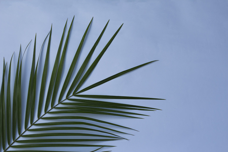 green palm leaf on blue background,with copy space