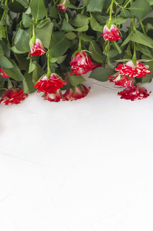 beautiful little roses on white background flat layout with copy space.