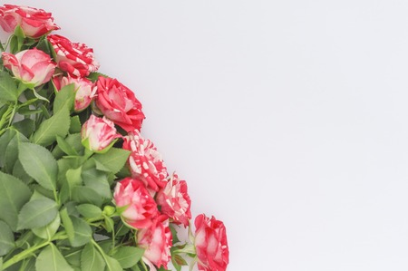 flat corner layout ,beautiful roses on white background with copy space top view. 版權商用圖片