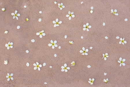 white flowers on pink concrete background flat layout.