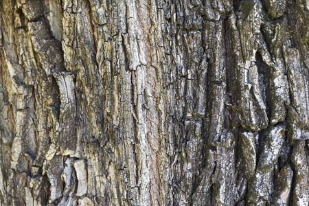 Seamless tree bark background. Brown texture of the old tree.