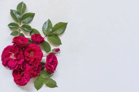 composition of rose flowers and green leaves on a white background.with copy space.flatley is the top view.