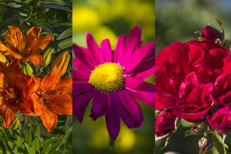 Collage of colored and brightly blooming flowers in the strip. Reklamní fotografie - 130072839