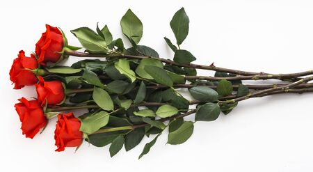 five juicy red roses on long stems on white background. Stockfoto