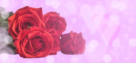 roses on a pink blurred background with hearts.Valentines day.