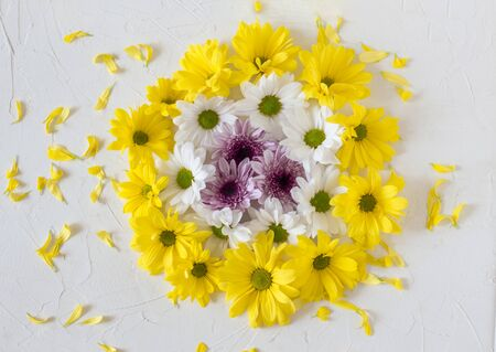 composition of chrysanthemum flowers on a white background.