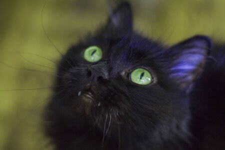 Black cat with green eyes looks up carefully, Halloween holiday 版權商用圖片