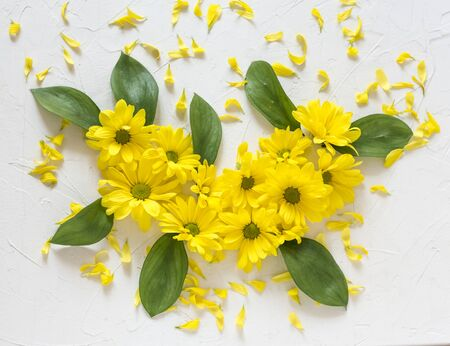 composition of yellow chrysanthemum flowers on a white background Zdjęcie Seryjne - 129255227
