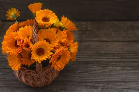 Fresh calendula flowers in a wicker basket on on wooden a table.