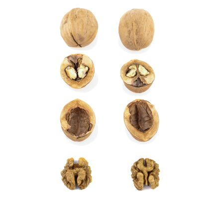 walnuts shells and kernels are laid out in rows on a white background.