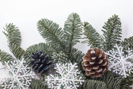 spruce branches with pine cones isolated on white. Imagens