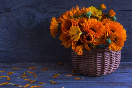 bouquet of Fresh calendula flowers in a basket on a blue wooden background.