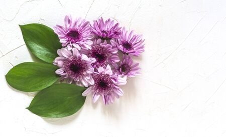 flat lay a bouquet of purple chrysanthemums with a copy of the space.