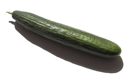 a long green cucumber on a white background with a shadow from the sun. Standard-Bild