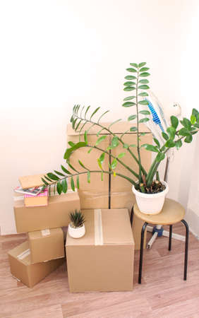 cardboard boxes full of things, moving to a new house Imagens