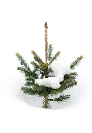 small green tree in the snow, Christmas background Imagens