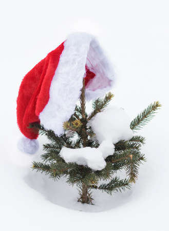 Santa Claus hat on a small green Christmas tree in the snow, Christmas background