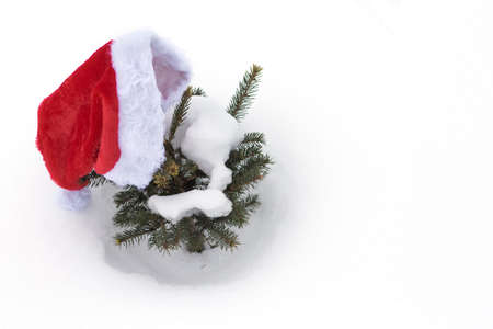Santa Claus hat on a small green Christmas tree in the snow