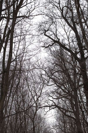 bare branches of winter trees in the forest against the sky