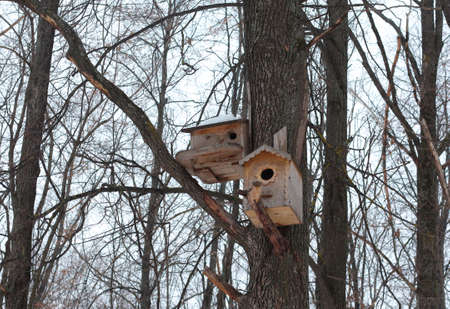 Birdhouses on a tree in a winter forest against the sky