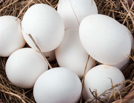 white chicken eggs in a hay basket close-up, top view 免版税图像