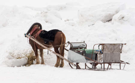 horse harnessed to a sleigh, horse riding in Russia on holiday