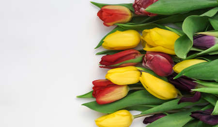 Colorful bouquet of tulips on a white background with a copy of the space