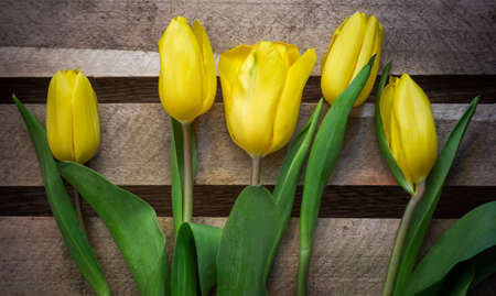 yellow bouquet of tulips on the background of wooden boards 免版税图像