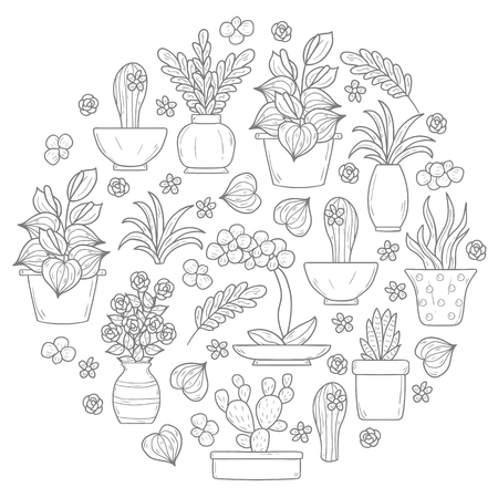 ferns and orchids: Vector houseplant background in circle shape with hand drawn cartoon objects
