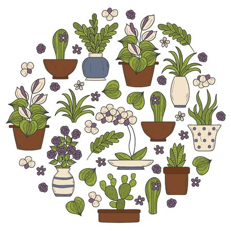 houseplant: Vector houseplant background in circle shape with hand drawn cartoon objects