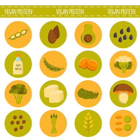 protein source: Vector cartoon vegan sources of protein. Healthy lifestyle concept. Vegan protein food. Chia, soya, avocado and others healthy vegan protein nutrition. Cartoon vector organic raw protein source food