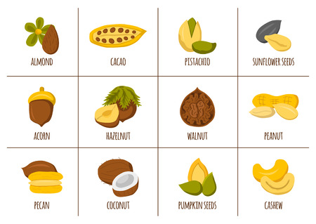 protein source: Vector cartoon nuts and seeds icons. Healthy organic snack. Cartoon nuts types: walnut, almond, hazelnut, coconut, cashew. Vegan protein source. Allergic product. Healthy vegan nutrition. Healthy oils