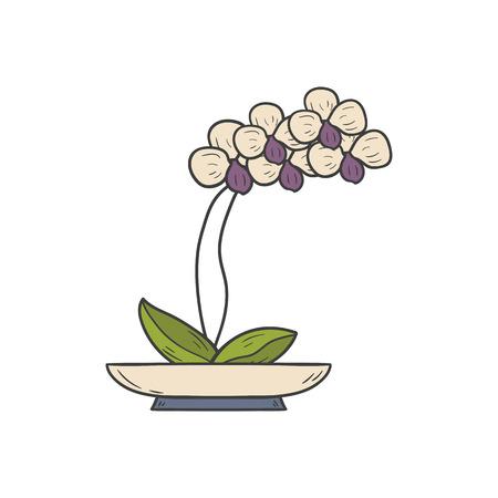 Vector illustration with cartoon hand drawn orchid, flowerpot. Cartoon house plant interior design. Vector white orchid. House plant hand drawn background. Flower shop, emblem, background concept Illustration