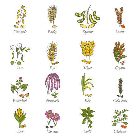 Vector illustration with cartoon hand drawn porridge cereals icons: oats seeds, soybean, rye, wheat, quinoa, rice, chia seeds, lentil, chickpeas. Healthy breakfast vector concept. Food hand drawn icon Ilustracja