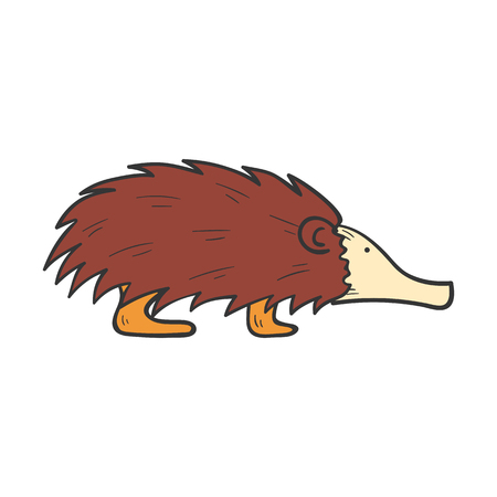 Vector cartoon illustration with hand drawn brown isolated australian animal echidna on white background. Exotic tropical animal icon. Vector echidna isolated. Children book cover illustration Illustration