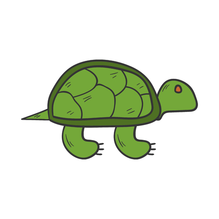 vertebrate: Vector cartoon illustration with hand drawn green isolated turtle animal on white background. Exotic tropical animal icon. Vector turtle isolated. Children book cover illustration