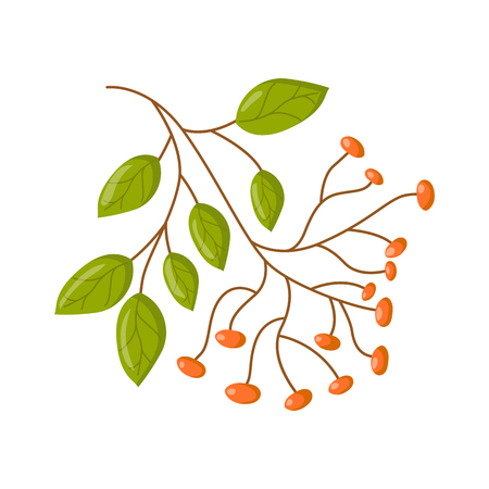Vector illustration with cartoon isolated medicine herb bunch on white background. Aromatic herb for ayurveda or herbal medicine. Natural green leaf for aromatherapy. Ayurveda icon