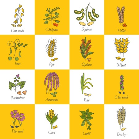 Vector illustration with cartoon hand drawn porridge cereals icons: oats seeds, soybean, rye, wheat, quinoa, rice, chia seeds, lentil, chickpeas. Healthy breakfast vector concept. Food hand drawn icon Illustration