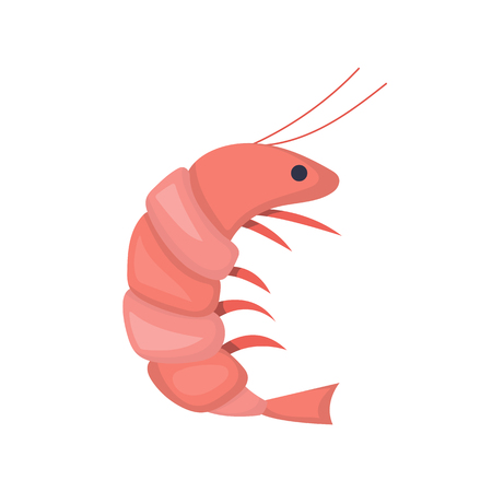 Vector illustration with cartoon isolated cute shrimp character. Sea food icon. Vector fish market object. Vector cartoon character for children book cover illustration. Red shrimp ison