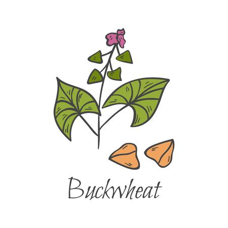 花を収穫した手描きのそばアイコン付きベクトル漫画イラスト。分離されたシリアル アイコン。生の種子、健康的な食品オブジェクト。農業アイコン。白い背景にベクトルそば