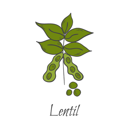 Vector illustration with cartoon hand drawn isolated raw lentil. Healthy food icon. Fresh organic vegetarian or vegan protein. Cereal lentil vector icon on white background Stock Illustratie